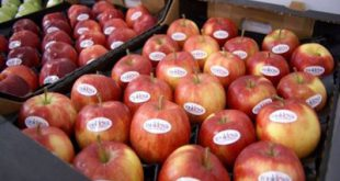 شانه میوه پلاستیکی سیب